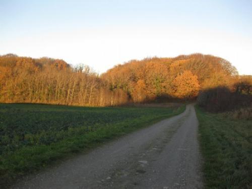 Hald/Hejlskov - 3 - Skoven på Lærkenborgvej